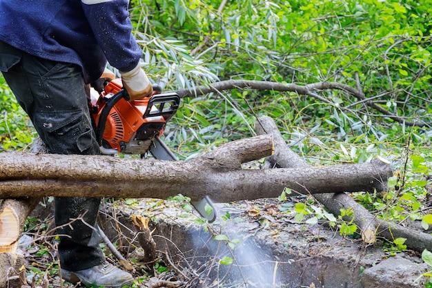 Professionele stadsbedrijven die een grote boom in de stad kappen nadat een orkaanstorm bomen een storm heeft beschadigd