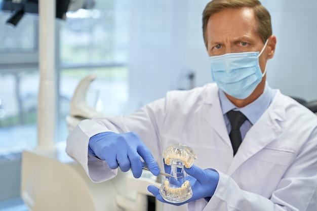 Professionele tandarts die kies gebruikt tijdens het demonstreren van het tandenmodel