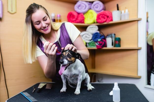 Professionele trimmer die de oren van de hond schoonmaakt bij trimsalon.