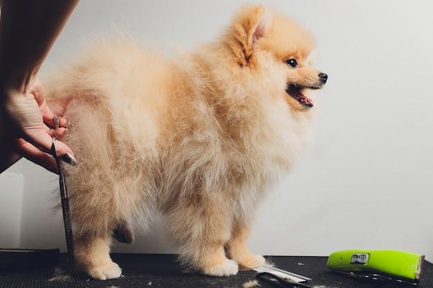 Professionele trimmer trimt langharige hondenpoten