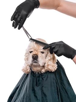 Professionele zorg voor een hond. groomer tools in handen houden