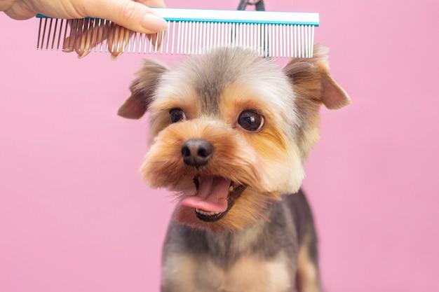 Professionele zorgt voor een hond in een gespecialiseerde salon.