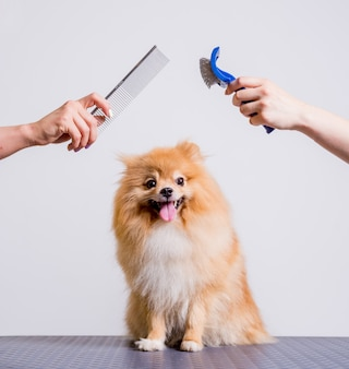 Professionele zorgt voor een hond in een gespecialiseerde salon