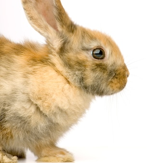 Profiel van :: close-up op konijn geïsoleerd