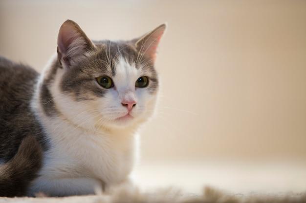 Profielportret van jong aardig klein leuk slim wit en grijs binnenlands kattenkatje met het glimlachen uitdrukking op witte exemplaar ruimteachtergrond. thuis houdend dierlijk huisdier, het wildconcept.