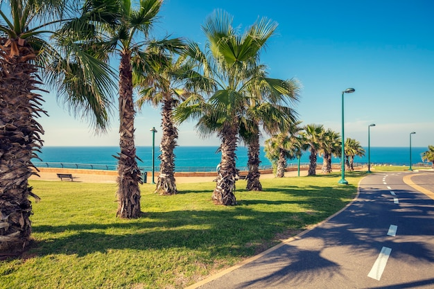 Promenade met palmbomen. netanja. israël