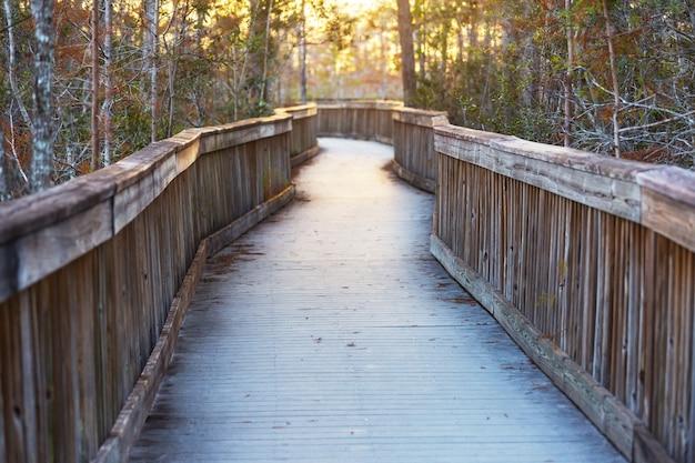 Promenades in het moeras in everglades national park, florida, verenigde staten.