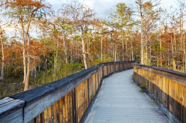 Promenades in het moeras in het everglades national park, florida, vs.