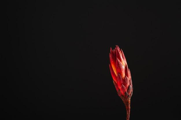 Protea van droge bloemen op een donkere achtergrond