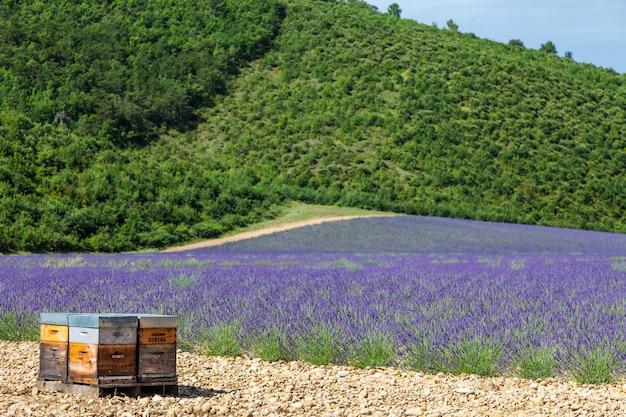 Provence, zuid-frankrijk. bijenkorf gewijd aan de productie van lavendelhoning.