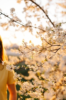 Pruimenbloesem in het voorjaar bij zonsondergang