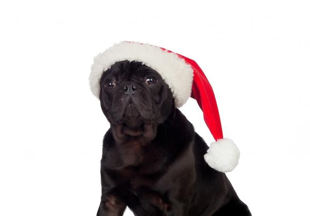 Pug carlino van nice hond met kerstmishoed op witte achtergrond wordt geïsoleerd die