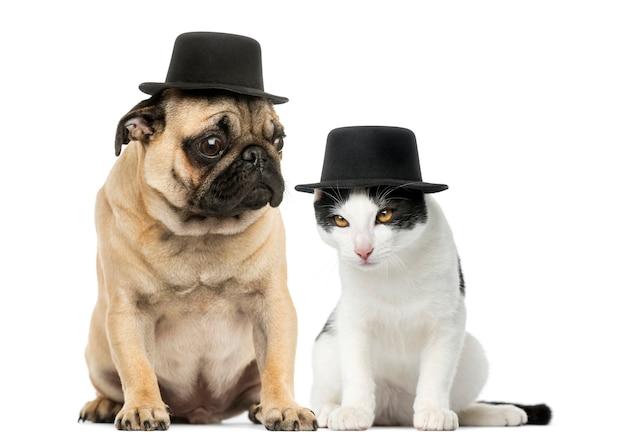 Pug puppy en kat die een hoge hoed dragen