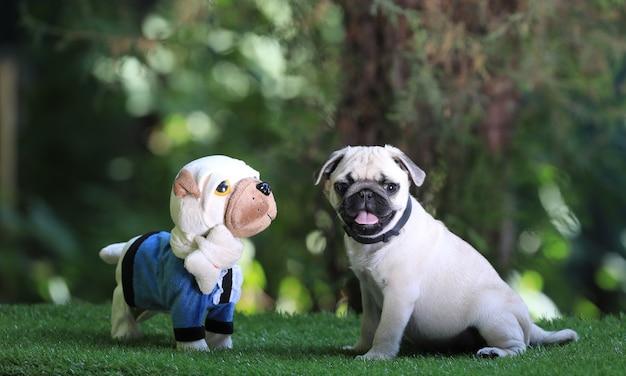 Pug puppy speelt met een speeltje