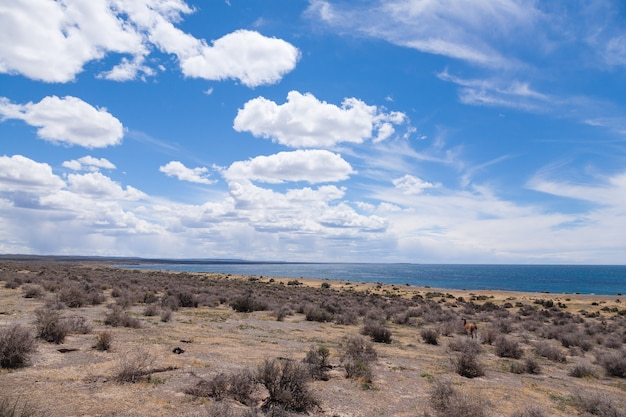 Punta tombo strand dag uitzicht, patagonië landschap, argentinië