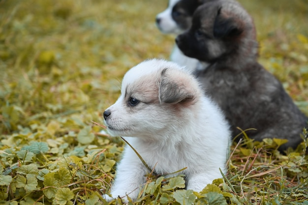 Puppies die buiten op het gras zitten