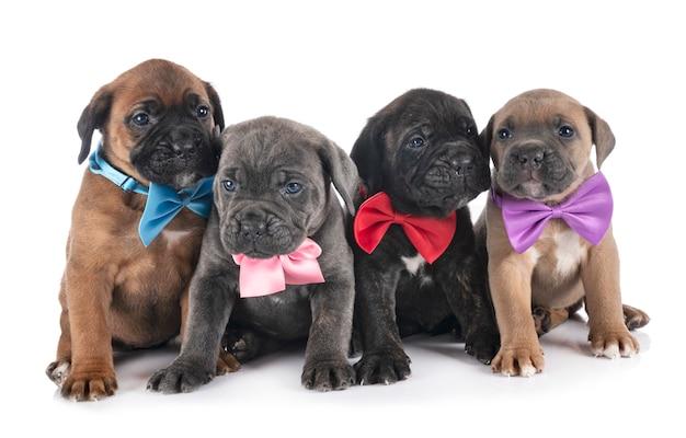 Puppies riet corso