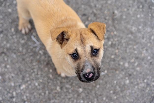 Puppy dat op straat leeft