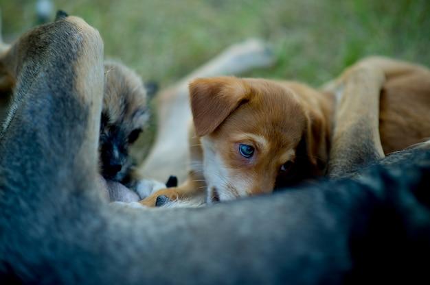 Puppy die moedermelk van honger eet
