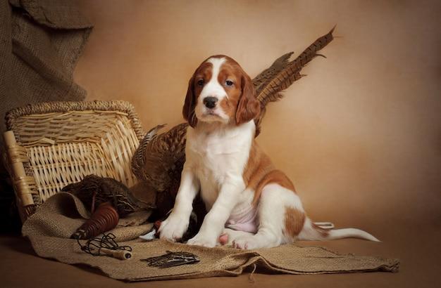 Puppy en fazant