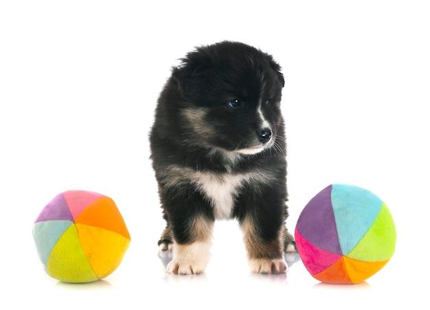 Puppy finse lappenhond