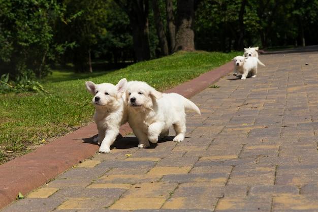 Puppy golden retriever-puppy die rond op een rotsachtig spoor lopen