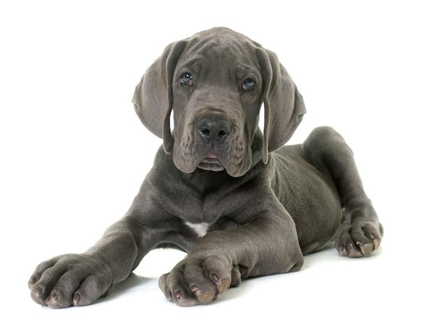 Puppy grote deen