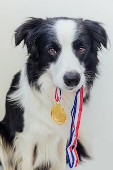 Puppy hond border collie winnaar gouden trofee medaille in mond geïsoleerd houden