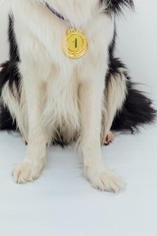 Puppy hond pawa border collie met winnaar of kampioen gouden trofee medaille geïsoleerd