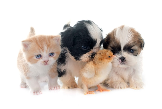 Puppy, kitten en kuiken