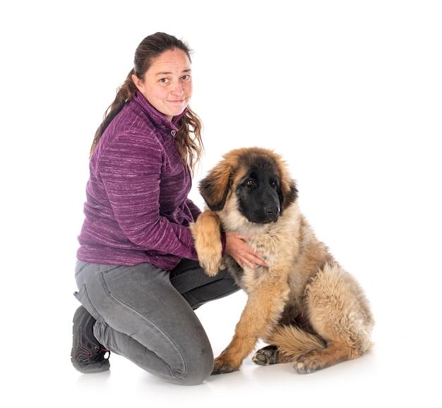 Puppy leonberger en vrouw voor witte muur