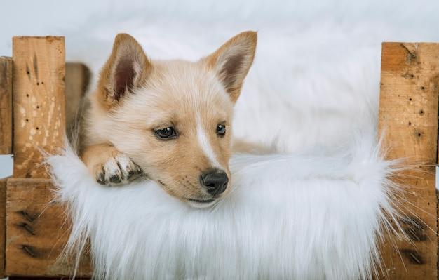 Puppy liggend in zijn bed met een witte deken van haar