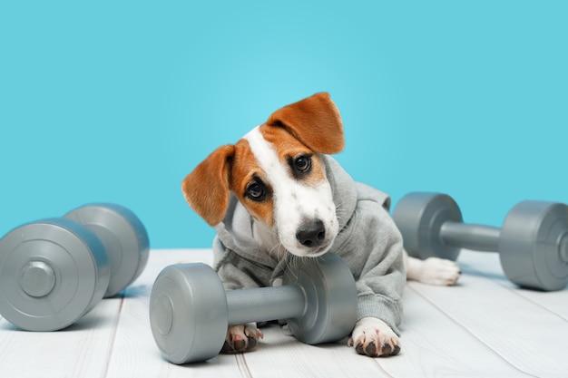 Puppy met sportartikelen