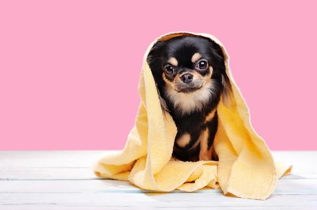 Puppy na het baden gewikkeld in een handdoek