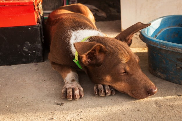 Puppy op de grond liggen