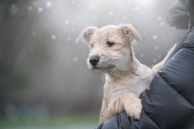 Puppy op een achtergrond met bokeh defocus. red het dier