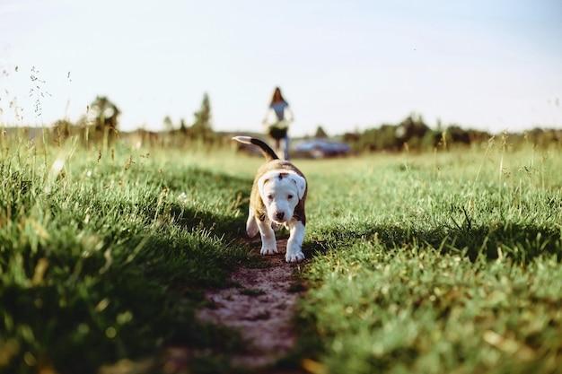 Puppy op een gebied in een fiets in de rug van zonnig licht