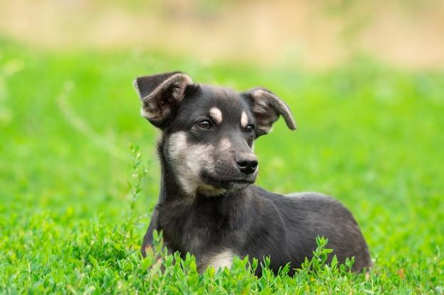 Puppy op het gras