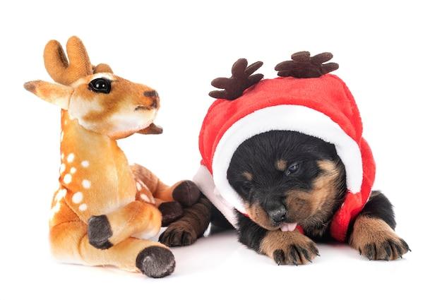 Puppy rottweiler in kostuum