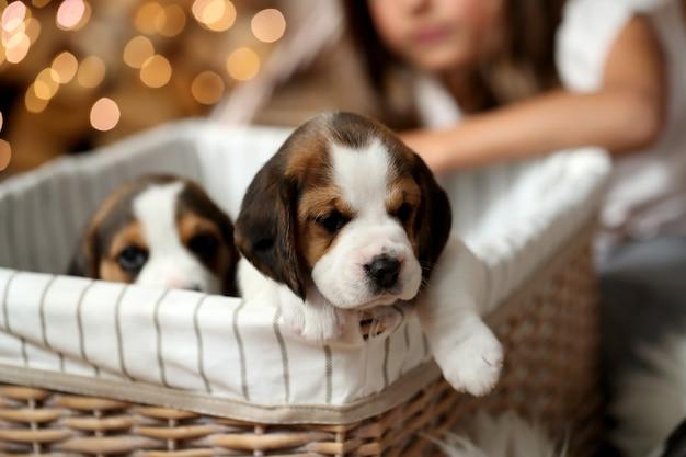 Puppy's in een mand