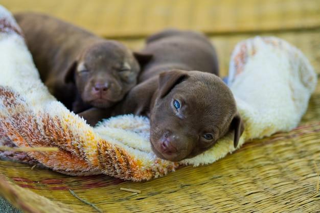 Puppy, schattige babyhond, slapen