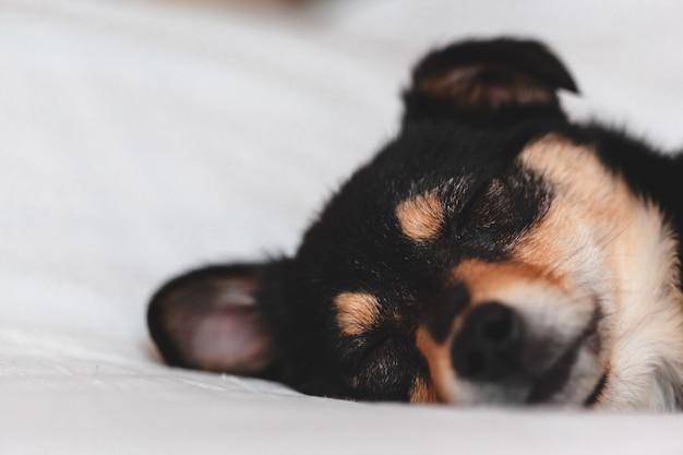 Puppy slapen. detailopname
