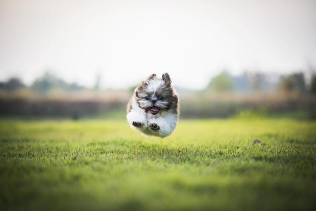Puppy springen op groene weide uitgevoerd. gelukkig natuurlijk huisdier als achtergrond.