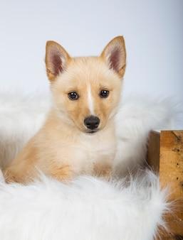Puppy stopte in zijn bed met een witte deken van haar