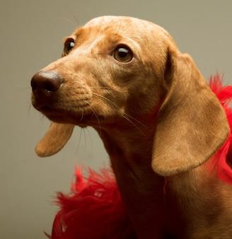Puppy tarief