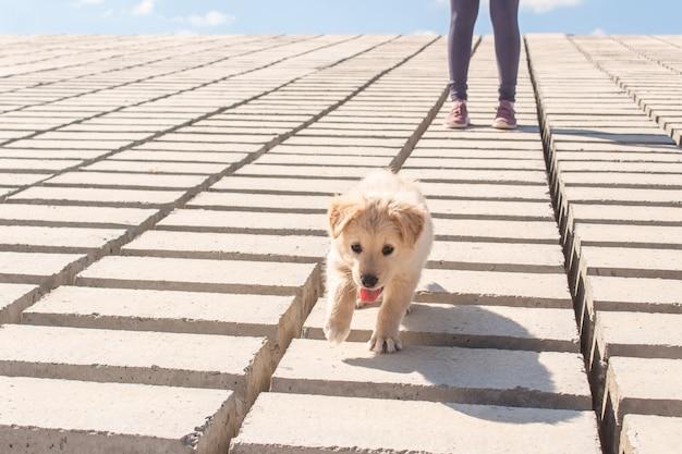 Puppy wandelen met zijn baasje langs de kust.