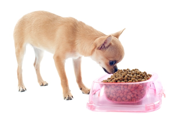 Puppychihuahua en voedselkom