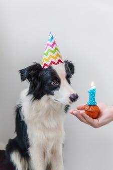 Puppyhond die verjaardagshoed draagt die geïsoleerde vakantiecake bekijkt