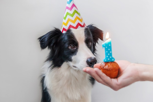 Puppyhond die verjaardagshoed draagt die vakantiecake met nummer één kaars op witte achtergrond bekijkt