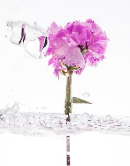 Purpere anjer die in water valt